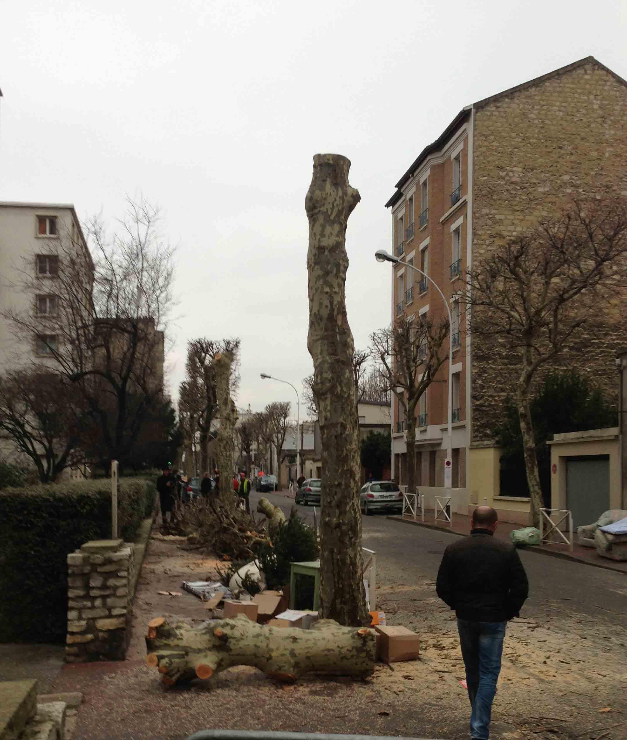 Abattages des platanes rue Louis Rolland
